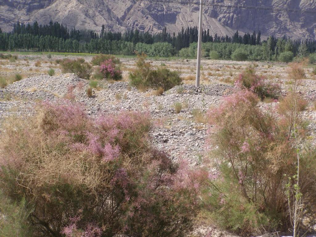Am Rande des Pamirgebirges, Xinjiang, im Mai