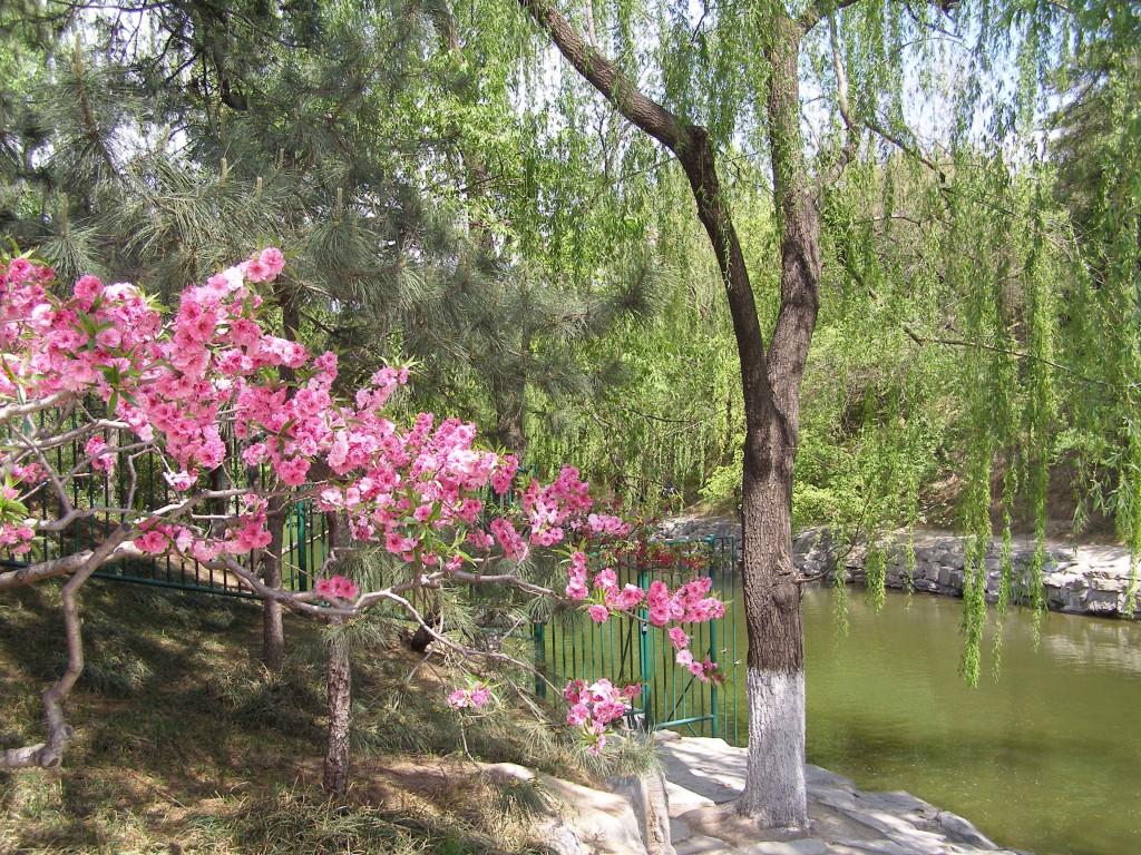 China beste Reisezeit : Frühling